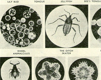 Antique Print, MICROSCOPE PICTURES 1915 1920s wall art vintage b/w lithograph illustration natural science chart
