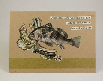 Stationery - Handmade Blank Greeting Card (A1/4-Bar) - Black Drum Ecosystem - Golden Guide to FISHES