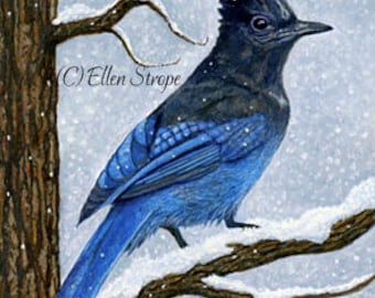 CARD, stellar jay decor, bird decor, note cards, Ellen Strope, castteam, home decor,bird cards
