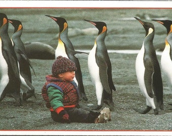 Vintage 1990s Postcard King Penguins and Child South Georgia Island Atlantic Ocean National Geographic Photochrome Postally Unused Set of 3
