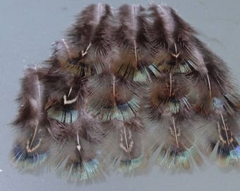 Set of 10 down Colchis melarictic pheasant feathers