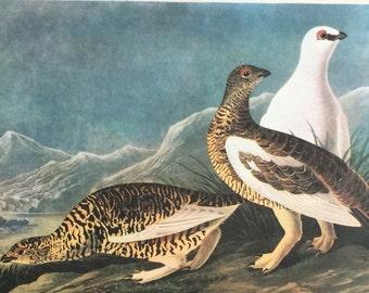 Vintage Bird Prints - Audubon Print - Vintage Bird Picture - Antique Bird Prints - Grouse and Pigeon