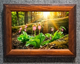 """Framed Smoky Mountains wildflower Pink Lady Slippers """"Pink Ladies"""""""