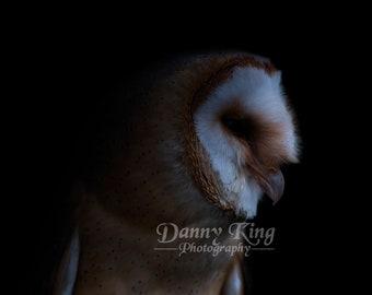 Barn Owl In The Night