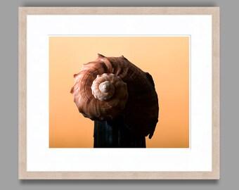 SEASHELL #6 - Framed Art Photography, Home Decor, Wall Art, Nature, beach, seashells, ocean