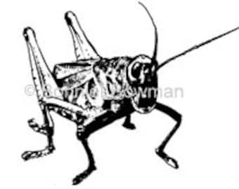 """Grasshopper Thermofax Silk Screen Small  3 3/4"""" x4 7/8"""