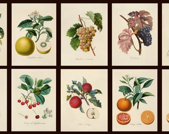 Botanical Collection#3  of 10 vintage images pictures Fruits 1800s Antique Botany Instant Download printable 300dpi