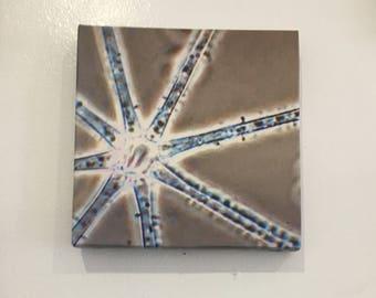 diatom #3