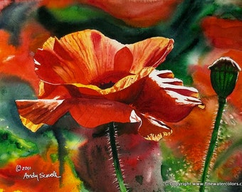 Red Poppy Art Print - a limited edition s/n giclee art print from an original watercolor of poppies glowing in the sun - by Andy Sewell