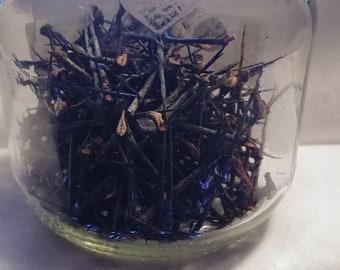 Hawthorn Thorns