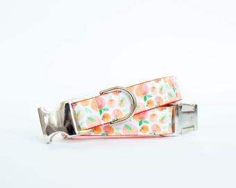 Peachy Peaches Summer Dog Collar