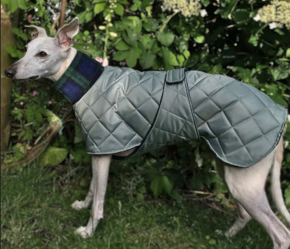 Whippet and greyhound coats with underbelly protection