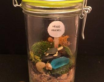 Sea Turle  Moss Terrarium, Great Low light, Desktop Buddy