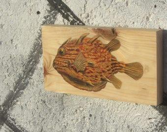 Wooden Print - Round Boxfish | Wood | Print | Wall Art | Decor | Natural Prints | Surf Art