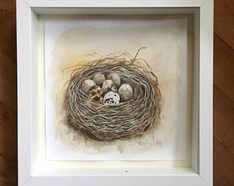 Quail Nest No. 2 Original Framed Watercolor