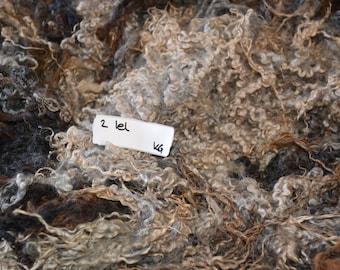Leicester Longwool variegated colors. Loose. 1.42kg/3.13lbs