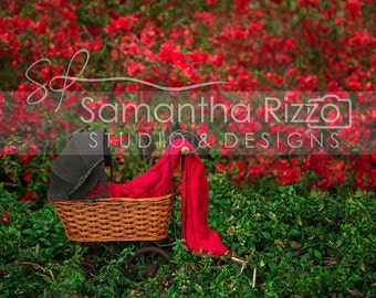 Digital Newborn Photography Background - Red Riding Carriage