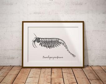 Printable art, Nautical print, Nature print, Digital download, Digital print, Wall art, Office decor, illustration, instant download,