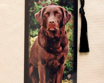Chocolate Labrador Bookmark