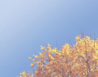 Treetop Color Photo Print { Yellow, hazy, blue, sunshine, sunlight, fall, leaves, branches, wall art, macro, nature & fine art photography }