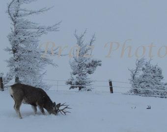 Winter Survival (Set of 3)