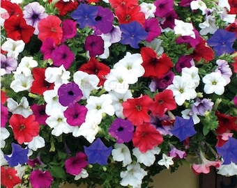 200 seeds Hanging Petunia Hybrid for hanging baskets white blue red purple colors rare