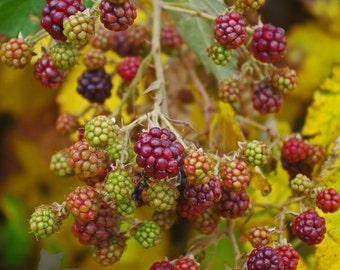 Oregon Raspberries in the Fall