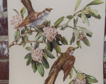 """Cecil Golding Print Lithograph Yellow Billed Cuckoo 25"""" x 18"""""""