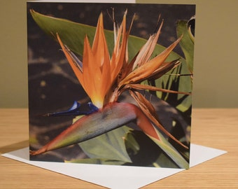 PARADISE -   Blank Greeting Cards