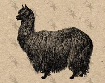 Vintage picture Lama Alpaca Black White image Instant Download Digital printable retro drawing picture clipart graphic tote kitchenHQ 300dpi