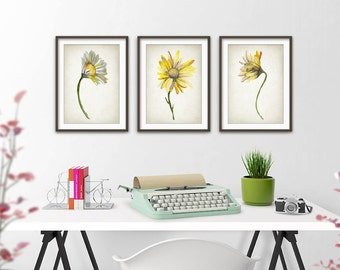 Daisy Watercolor Wall Art Print Set of 3 - Modern Nursery Home Decor - Daisy Flower Giclee Art Poster - Chic Bedroom Watercolour Art