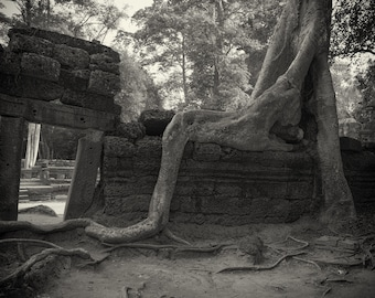 Sepia toned photograph of a tree in the grounds of an ancient temple.