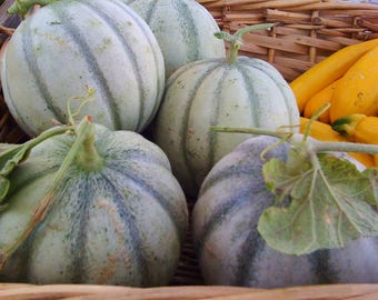 French Cantaloupe Charentais Melon Rare Seeds Excellent Flavor and Aroma Grown to Organic Standards