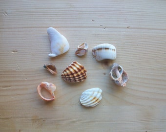 Shell fragments, craft supply, 8 pieces, jewelry supplies, surf tumbled shell fragments C5