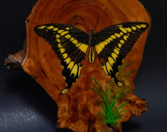 "1987 7 1/2"" x 8 1/2"" Wood Varnished Wall Plaque Swallowtail Butterfly"