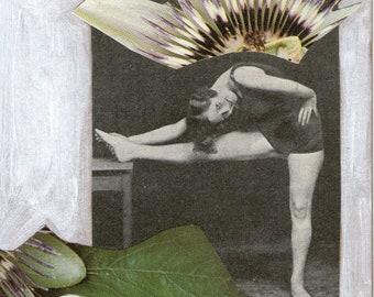 Flora & Fauna Card No. 19