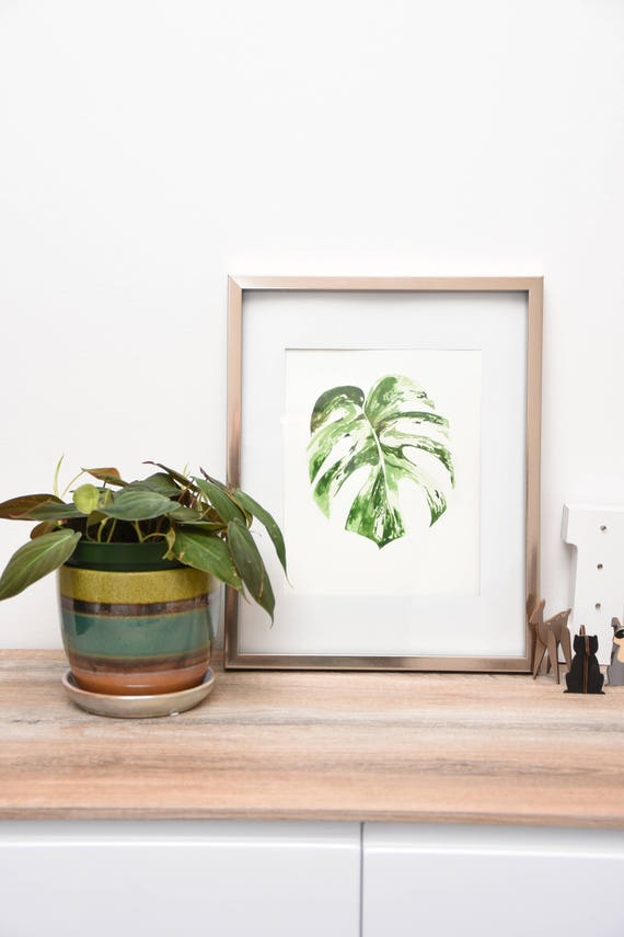 Monstera Watercolor painting variegated monstera deliciosa