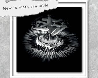 poster Passionflower bw photography poster printable instant download 5 X 5 8 X 8 10 X 10 12 X 12 15 X 15 16 X 16 18 X 18 20 X 20 30 X 30 50 X 50