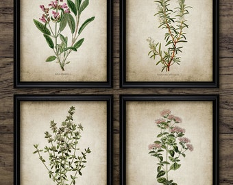 Herb Print Set of 4 - Oregano - Rosemary - Sage - Thyme - Kitchen Art - Printable Art - Set Of Four Prints #168 - INSTANT DOWNLOAD