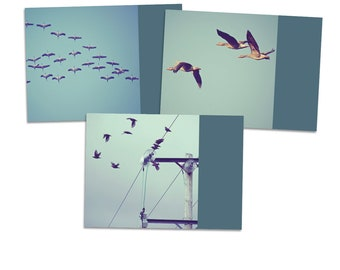 "3 Postcards ""Flight Lesson"" - postcard card photography photo birds flock flying geese goose bird"