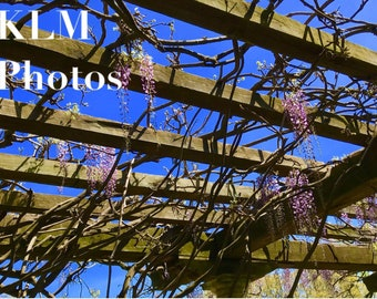 Trellis Floral Photo