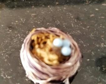 Robin egg nest