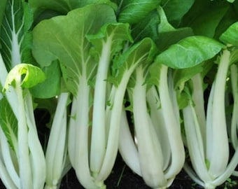 Pak Choi Seeds, Bak Choi Seeds, Chinese Cabbage Seeds,White mustard cabbage Seeds, Asian Vegetables, Asian Leafy Greens, Asian Micro Greens
