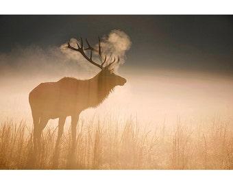 Wildlife Photography, Bull Elk, Fine Art, Photo, Print, Great Smoky Mountains, Nature, Sunrise, Cataloochee Valley, Home Decor, Gift, Autumn