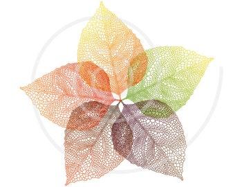Autumn vein leaves flower, digital clip art, skeleton leaves clipart, drawing, illustration, print, wall art, vector, EPS, instant download