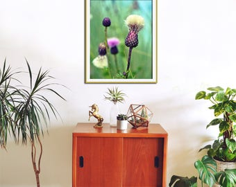 Thistle Photography, Botanical Art, Botanical Print, Scottish Art, Purple Wall Art, Large Botanical Art, Thistle Print, Botanical Wall Art