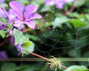Digital stock photo image summer flower bush and spider web with raindrops nature instant download free usage 1 pc