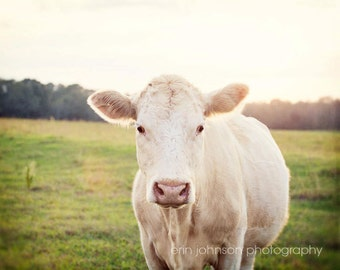 cow photography, rustic home decor, farm animal, farm photography, farm nursery art, country wall art, animal photography, farmhouse The Cow