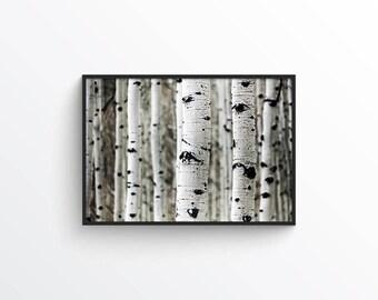Aspen Grove - Digital Print - Printable Art - Nature - Landscape - Forest - Mountains - Trees - Aspens - Minimal - Modern - Rustic