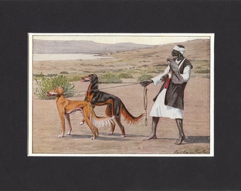 Saluki 1919  Vintage Dog Print by Louis Agassiz Fuertes Small Gazelle Hound Print Mounted with Mat Saluki Print Saluki Hound Print